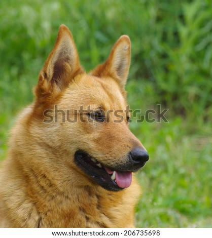 Outdoor portrait of cute mixed breed dog - stock photo