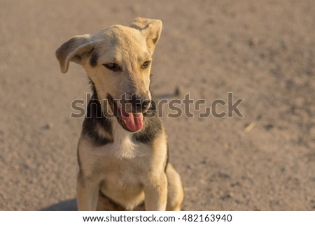 Outdoor portrait of cute young positive stray dog