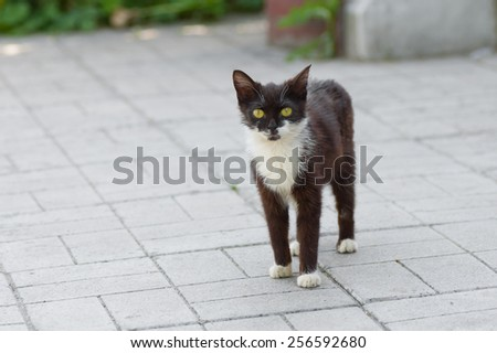 Outdoor portrait of kitten with yellow eyes - stock photo