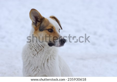 Outdoor portrait of mixed breed, flap-eared dog