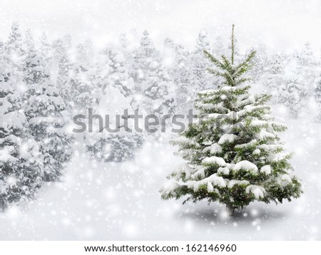 Outdoor shot of a nice little fir tree in thick snow, for the perfect Christmas mood - stock photo