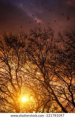 Outdoors autumn scene with trees and branches at sunset