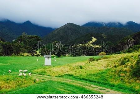 Outhouse among sheep, Stony Bay - stock photo