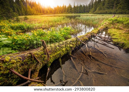 Outlying mountain lake on sunset, with big snag on the front. - stock photo