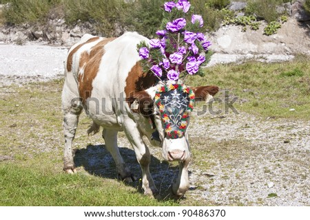 output of cows