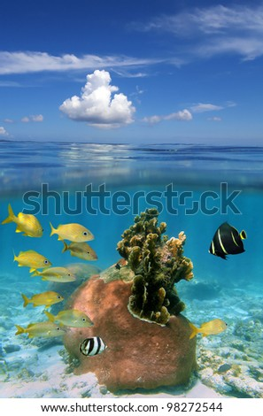 Over and under ocean with cloudy blue sky, underwater part with colorful coral and tropical fish - stock photo