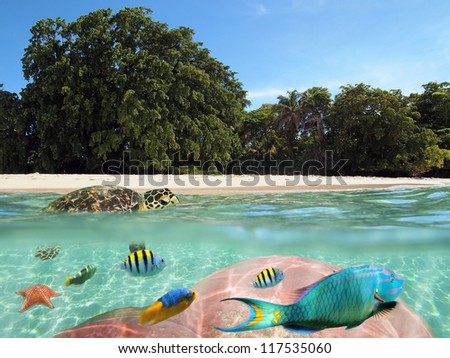 Over and underwater split view of a tropical beach with beautiful vegetation and a turtle on the water surface with colorful coral and fish below, Caribbean sea - stock photo