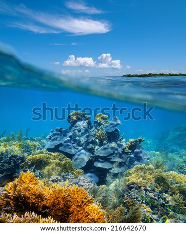over-under split view in the Caribbean sea with an healthy coral reef underwater - stock photo