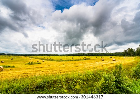 Overcast over the field with stacks of freshly harvested grain