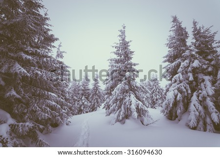 Overcast winter day. Landscape with snowy forest in the mountains. The path in the snow. A Christmas Tale. Color toning. Low contrast - stock photo