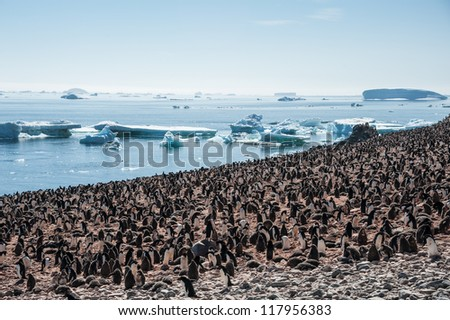 Overcrowded island, lots of gentoo penguins. Antarctica