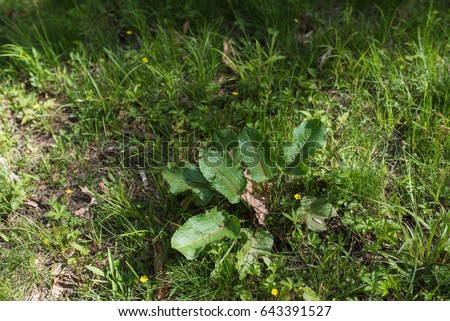 Overgrown Stock Images Royalty Free Images Amp Vectors