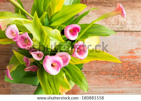 Overhead view of a bunch of beautiful fresh pink calla or arum lilies, Zantedeschia aethiopica, with their green leaves on an old rustic wooden table with copy space - stock photo