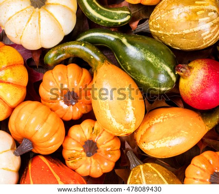 Overhead view of seasonal autumn gourd decorations on leaves. Filled frame layout.