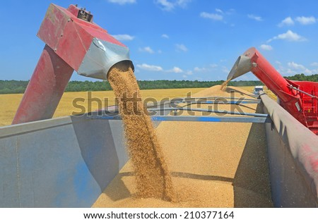 Overloading grain silo with a tractor in a car - stock photo