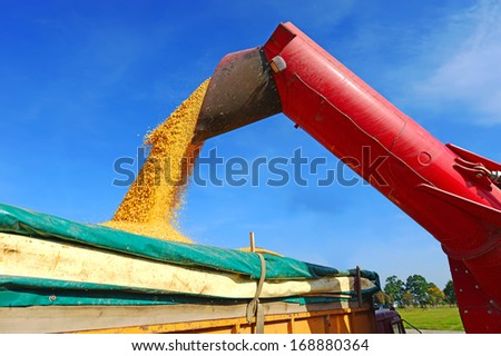 Overloading of maize from the hopper to the tractor vehicle.  - stock photo