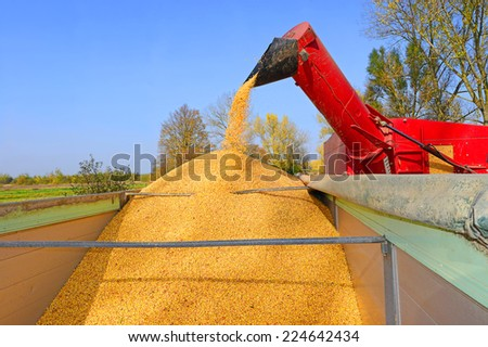 Overloading of maize from the hopper to the tractor vehicle - stock photo