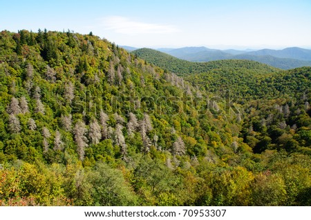 overlook of forest and hills with dead trees - stock photo