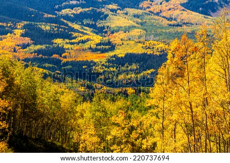 Overlook of mountain valley filled with yellow, orange and green changing Aspen trees and dark green pine trees on sunny fall morning - stock photo
