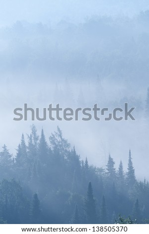 Overlooking a field of fog shrouded trees, Stowe, Vermont, USA - stock photo