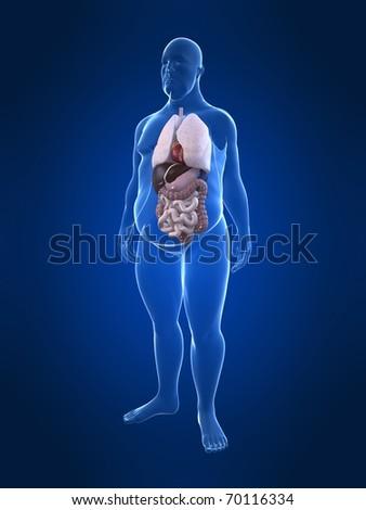 overweight man - anatomy - stock photo