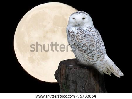 Owl against moon - stock photo