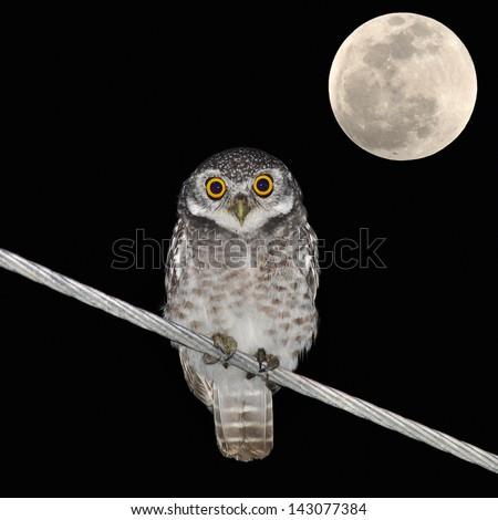 Owl bird at night and the moon - stock photo