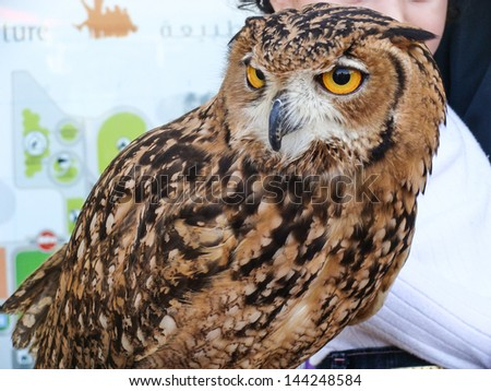 owl closeup - stock photo