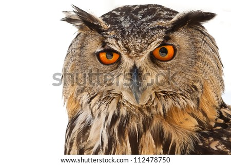 owl eyes - stock photo
