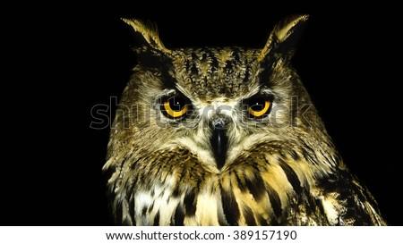 Owl face close up, isolated on black background - stock photo
