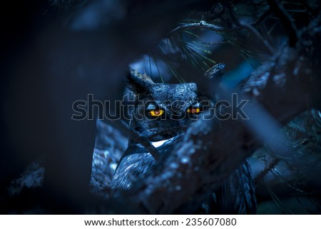 Owl in Tree at night with glowing eyes