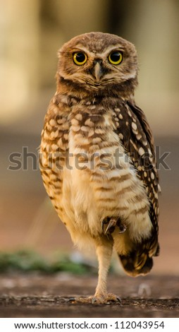 Owl looking attentive, with large yellow eyes. - stock photo