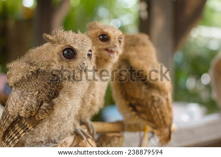 Owl on the branch - stock photo