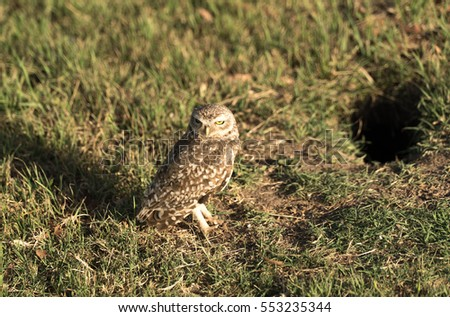 Owl on the grass