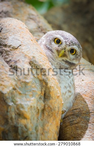 Owl Perched in deep forest jungle stand on tree hole  - stock photo