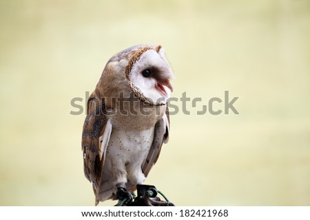 Owl portrait over green background - stock photo