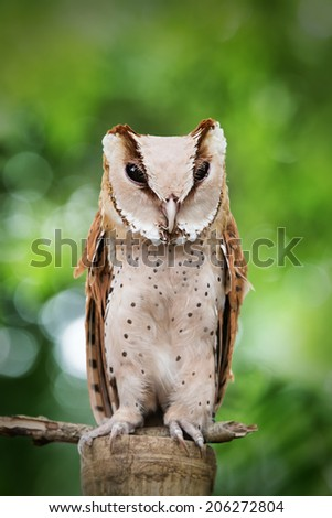Owl sit on the log with grean background - stock photo