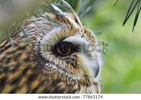 owl sitting in the forest