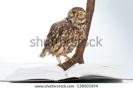 Owl while studying - stock photo