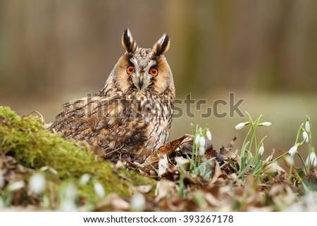 Owl with snowflakes - stock photo