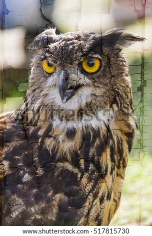owl with yellow eyes