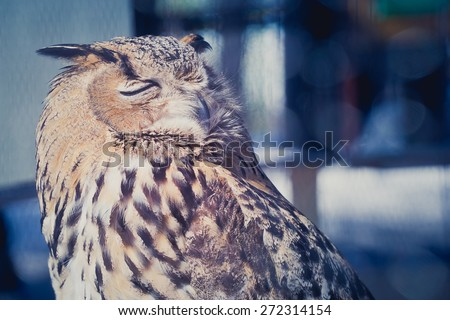 Owls sleep during the day - stock photo