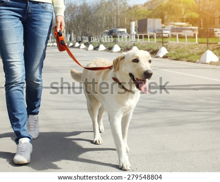 Owner and labrador retriever dog walking in the city - stock photo