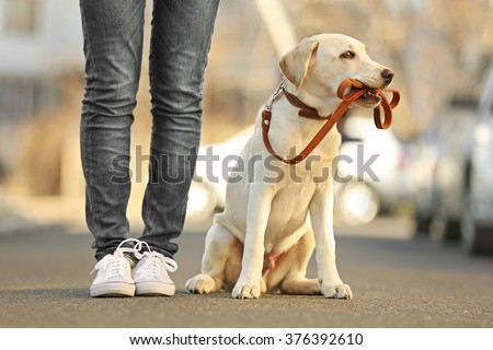 Owner and sitting Labrador dog in city on unfocused background - stock photo