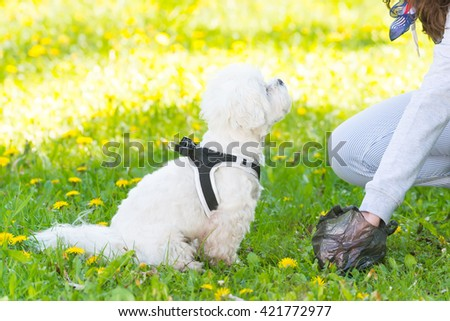 Owner cleaning up after the dog with plastic bag