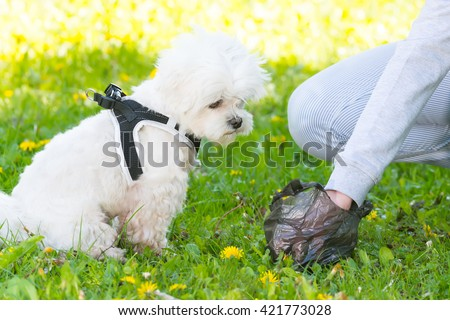 Owner cleaning up after the dog with plastic bag - stock photo