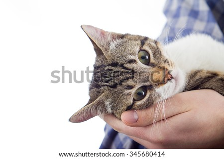 Owner hands holding a cat.Man hands holding a little cat in his hands.Cat Adoption.Cat care. - stock photo