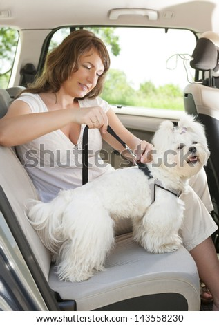 Owner of the dog attaching safety leash to harness to make a journey safe - stock photo