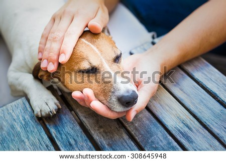 owner  petting his dog, while he is sleeping or resting  with closed eyes - stock photo