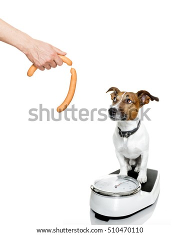 owner punishing dog with sausage for overweight, and to loose weight , standing on a scale, isolated on white background